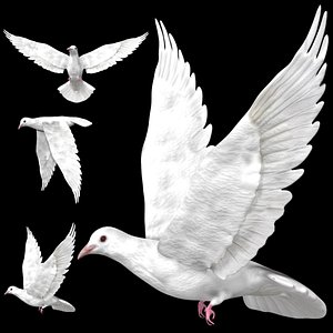 Fully rigged low poly white pigeon dove 3D model