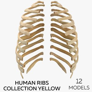 Human Ribs Collection Yellow - 12 models 3D model