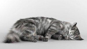 3D cat sleeping