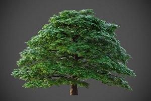 3D XfrogPlants Japanese Maple - AcerPalmatum