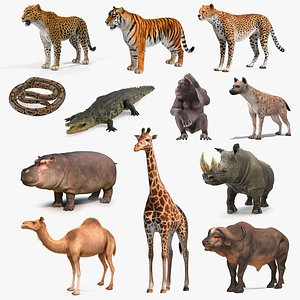 3D African Animals Collection 9