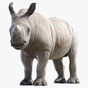 Rhino Baby Rigged 3D