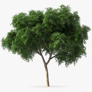 3D tree copperpod