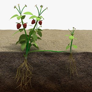 3D model strawberry plant runner scene
