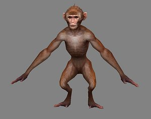 3D Cartoon animals - monkey model