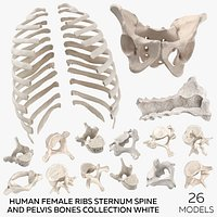 Human Female Ribs Sternum Spine and Pelvis Bones Collection White - 26 models(1)
