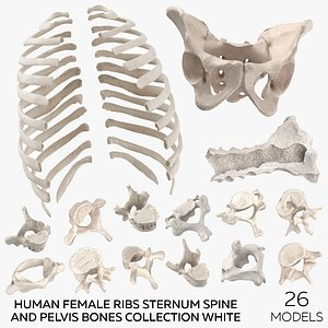 3D Human Female Ribs Sternum Spine and Pelvis Bones Collection White - 26 models model