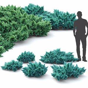 3D creeping shrub squamata