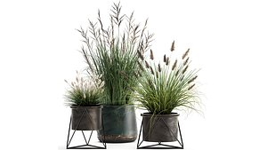 Reeds in a rusty Flowerpot for the interior 979 3D model