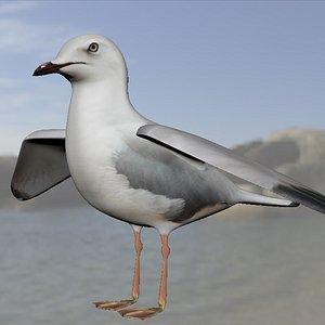 3D model seagull modelled