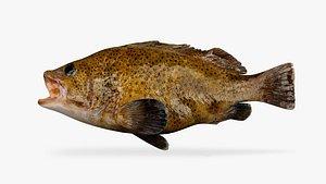 3D spoatted cod