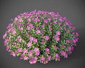 XfrogPlants Magenta Rockrose - Cistus Pulverulentus 3D