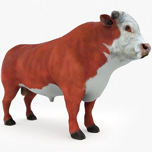 3D Hereford Bull Low Poly model