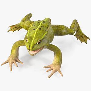 Froglet Rigged for Modo model