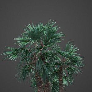 3D palm tree nature model