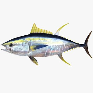 3d realistic yellowfin tuna model