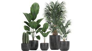 3D plants pots flowerpots model