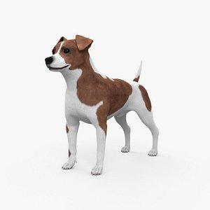 jack russell terrier 3D
