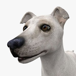 3D model 0005 Rigged Male Dog