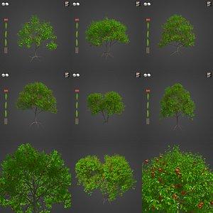 2021 PBR Pomegranate Collection - Punica Granatum 3D