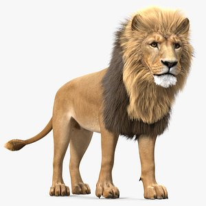 Male Lion Fur Rigged 3D model