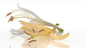 Japanese honeysuckle flowers 3D model