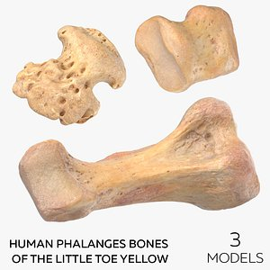 Human Phalanges Bones of the Little Toe Yellow - 3 models 3D model