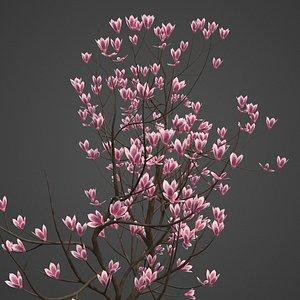 magnolia tree nature 3D model
