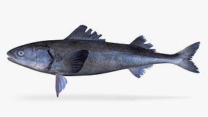 sablefish fish model