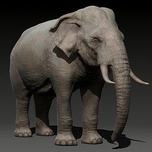 3D animal elephant model