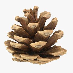 3D Pine Cone 10