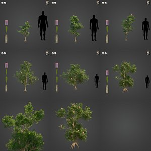 2021 PBR Saw Banksia Collection - Banksia Serrata 3D model