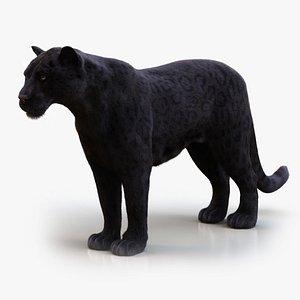 3D BLACK JAGUAR RIG XGEN-CORE model