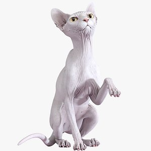 sphynx cat sitting pose 3D model