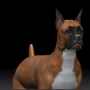 fully rigged low poly Boxer 3D model