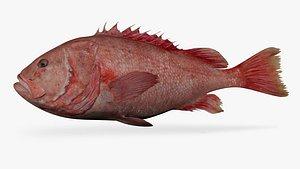 shortraker rockfish 3D model