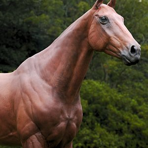 Horse Brown ZBrush 3D model