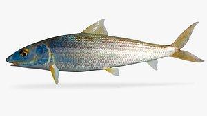 bonefish fish 3D model