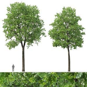 3D Oak-tree 01 model