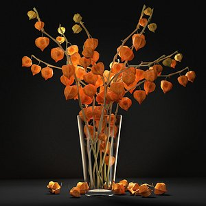 Bouquet with physalis 3D