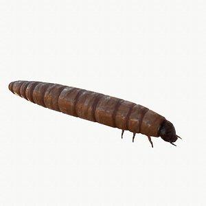 3D Worm model