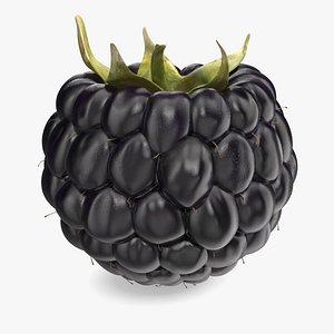 3D model Fresh Blackberry