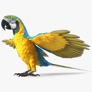 Blue and Yellow Macaw Parrot Neutral Pose 3D model