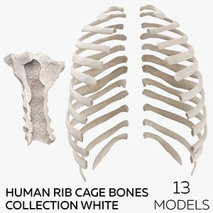 3D Human Rib Cage Bones Collection White - 13 models