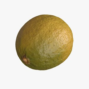 lime fruit 3D model