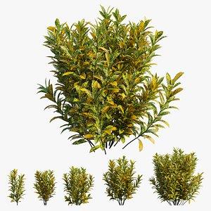 Croton plant set 16 3D
