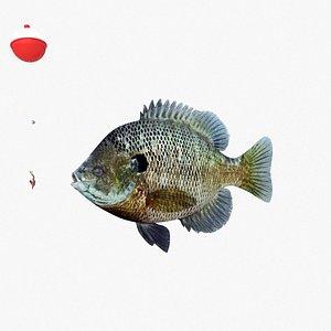 3D bluegill fish