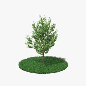 Pear Tree 3D