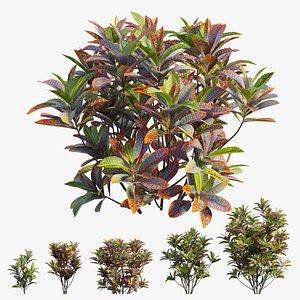 Croton plant set 18 3D model