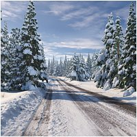 Forest road(1)